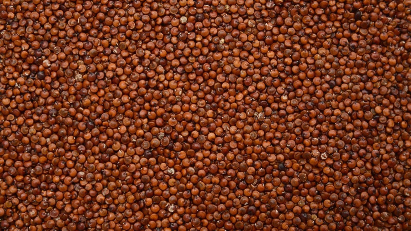 Komosa ryżowa cena 1kg czerwona Quinoa