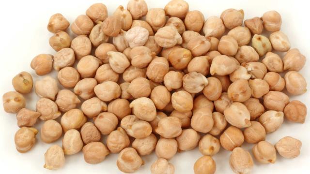 Ciecierzyca cena 1kg z Indii duża