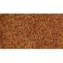 Ryż czerwony cena 1kg z Brazylii