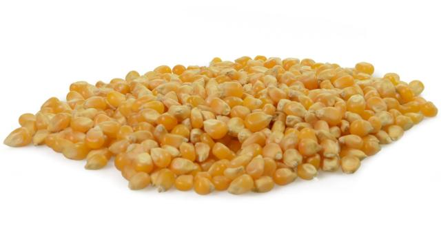 Kukurydza popcorn cena 1kg ziarno